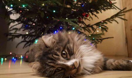 Ziemassvētku noskaņa katrā mājā
