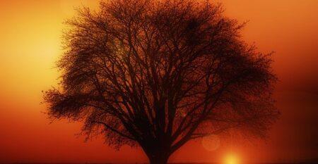 tree-117582_640